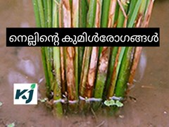 നെല്കൃഷി- എ ടു ഇസഡ് - പാര്ട്ട് -10 - കുമിള് രോഗങ്ങള്