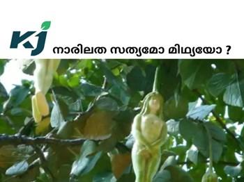 നാരിലത  ( liyathambara flowers ) സത്യമോ ? മിഥ്യയോ ?