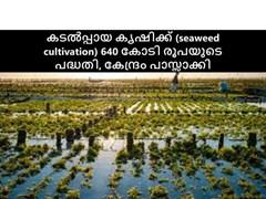 കടൽപ്പായ കൃഷിക്ക് (seaweed cultivation) 640 കോടി രൂപയുടെ പദ്ധതി, കേന്ദ്രം പാസ്സാക്കി