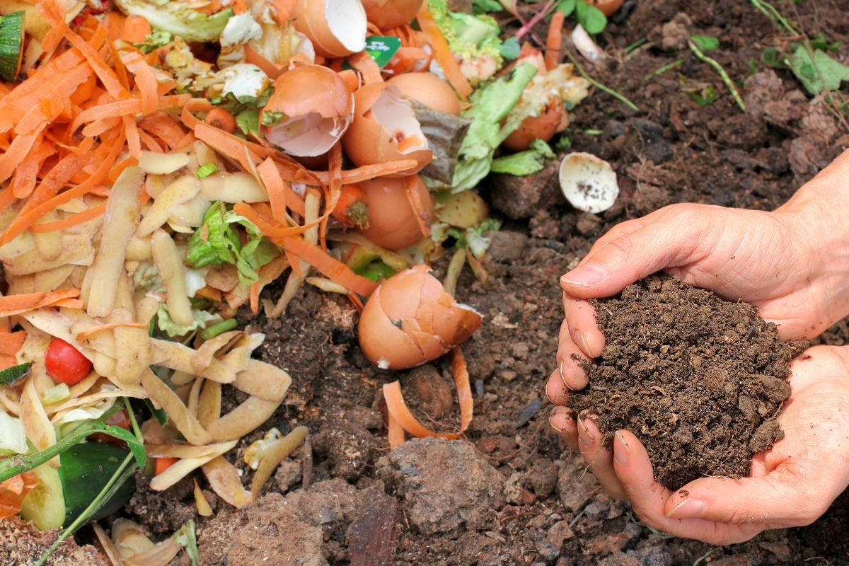 Homemade fertilizers