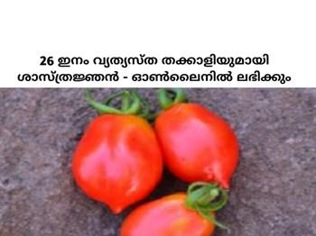 26 ഇനം നാടൻ തക്കാളിയുമായി ശാസ്ത്രജ്ഞൻ - ഓൺലൈനിൽ ലഭിക്കും - Collection of 26 types of Desi Tomato, Dr Prabhakar Rao, Bangalore