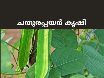 ചതുരപ്പയര് പ്രകൃതിദത്തമായ ഇറച്ചി ഇപ്പോള് നടാം Growing Winged Beans - chathurapayar  #krishijagran #agriculture #farming #farmer