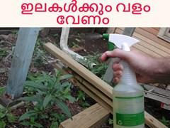 ഇലകളിലും വളം സ്പ്രേയ് ചെയ്യണം - Foliar application must for leaves and for plant growth