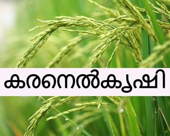 കരനെൽകൃഷി രിതികൾ - Upland Paddy farming