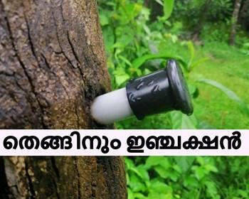 വെള്ളക്ക (മച്ചിങ്ങ) കൊഴിയാതിരിക്കാൻ തെങ്ങിന് ഇഞ്ചക്ഷൻ - Avoid dropping of immature Coconut nut through injection