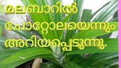 സുഗന്ധം പരത്തുംബിരിയാണിക്കൈത