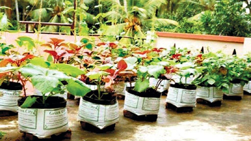 Terrace farming