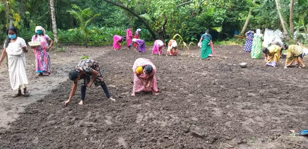 vadakkekara paddy field