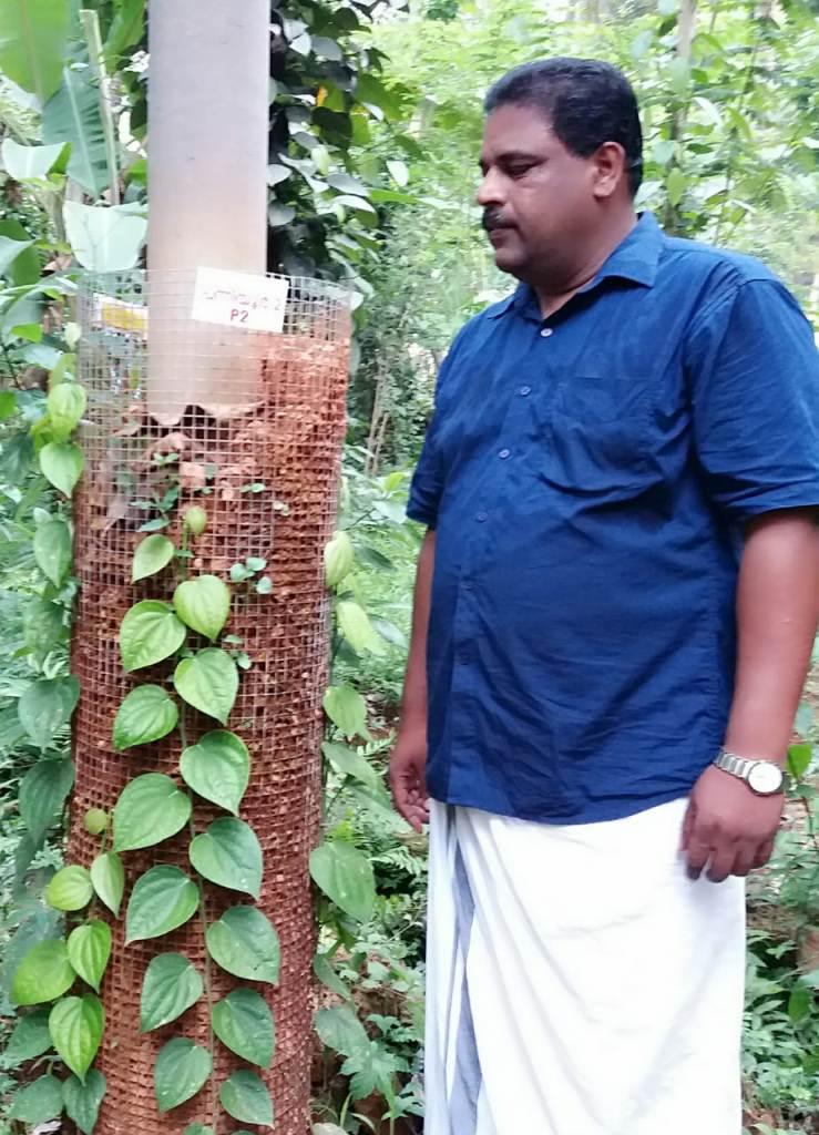 Biju Narayanan Bijus Pepper Garden
