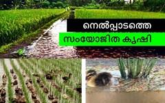 നെല്കൃഷി- എ ടു ഇസഡ് - പാര്ട്ട് - 15- സംയോജിത കൃഷി