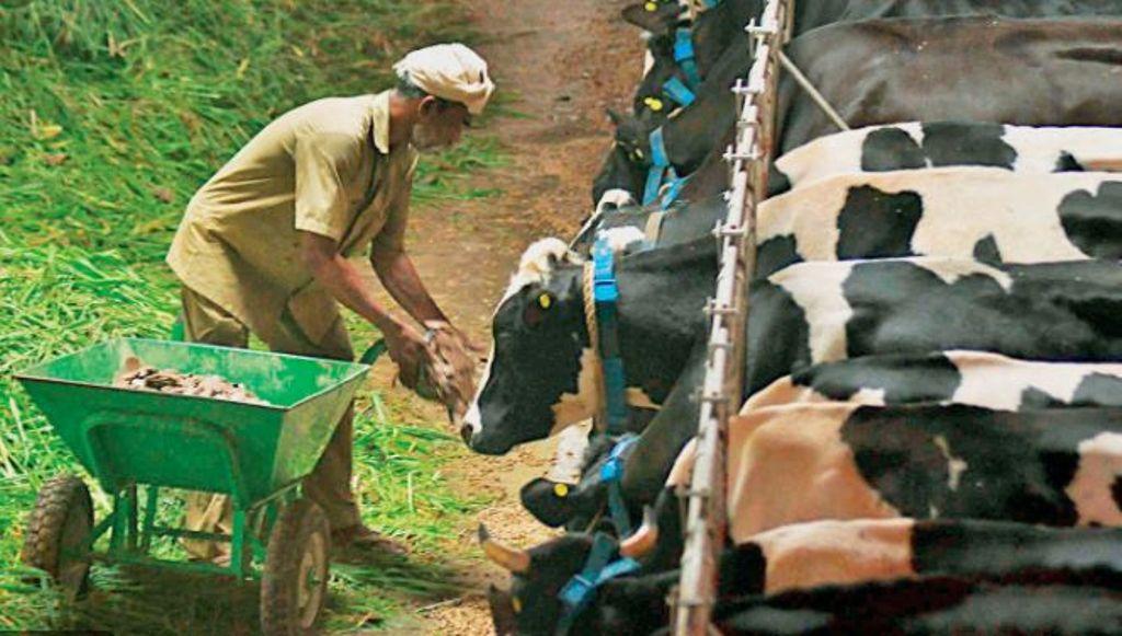 Milma dairy farmers