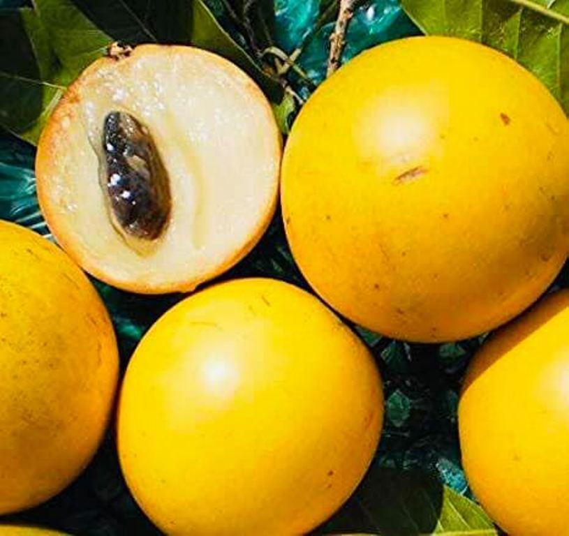 Abiyu fruit