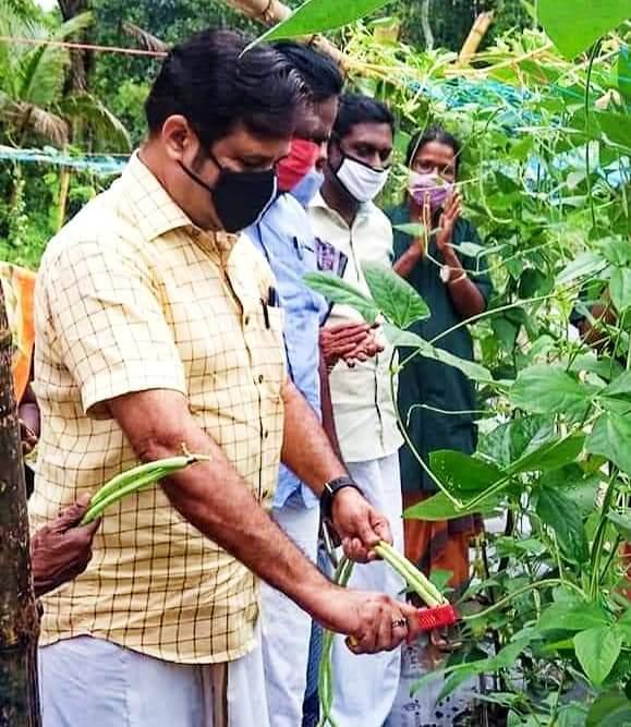 വയലാർ കാർഷിക കർമ്മ സേനയുടെ പച്ചക്കറി വിളവെടുപ്പ്