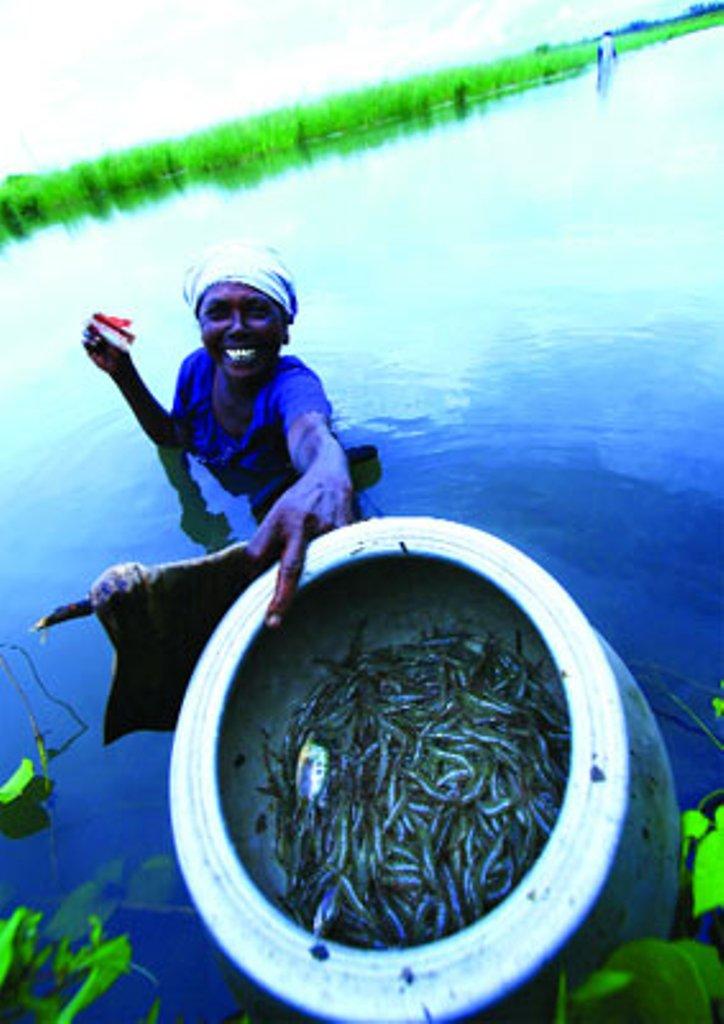 Fish, paddy farming