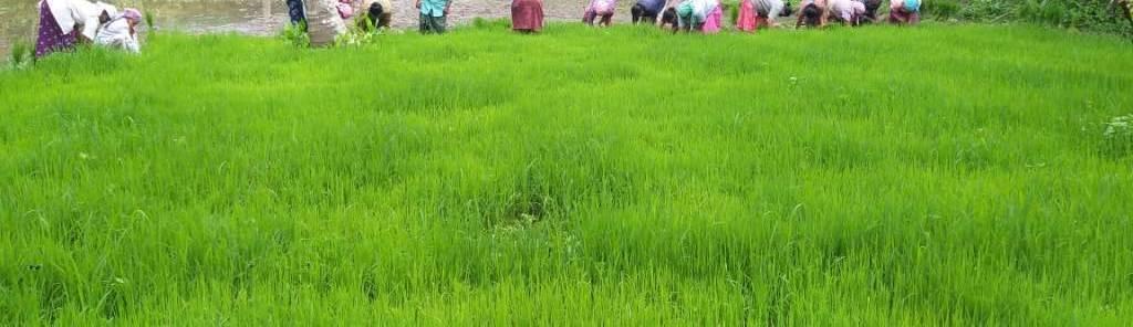 കുട്ടനാട് താലൂക്കിലെ തകഴി വില്ലേജിൽ സർക്കാർ അധീനതയിൽ ഉള്ള പുറമ്പോക്ക് നില