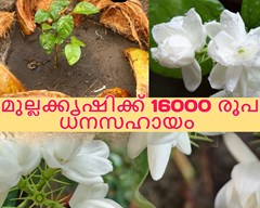 മുല്ലക്കൃഷിക്ക് 16000 രൂപ ധനസഹായം : വേഗം അപേക്ഷിക്കുക