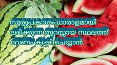 തണ്ണിമത്തൻ  കൃഷി ചെയ്യാൻ പറ്റിയ സമയം  ഡിസംബര് മുതല് മാര്ച്ച് വരെ.cultivate watermelon