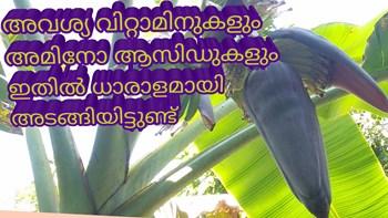 വാഴക്കൂമ്പിന് ഇത്രയും ഔഷധഗുണങ്ങളോ ? so many medicinal properties of Banana flower/vazhakkoombu