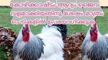 കോഴിക്കാഷ്ടം  അടിവളമായി ഉപയോഗിക്കുമ്പോൾ പാലിക്കേണ്ട കാര്യങ്ങൾ chicken manure as base manure