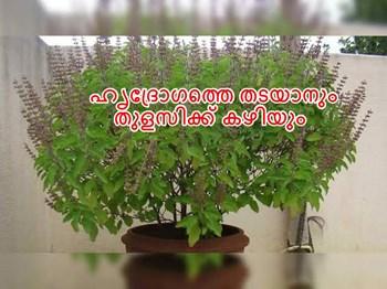 അറിയാമോ തുളസീ വിലാസം