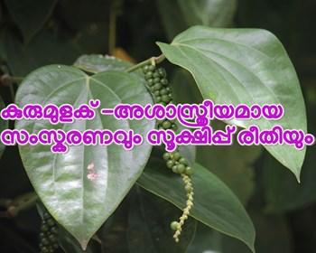 കുരുമുളക് -അശാസ്ത്രീയമായ സംസ്കരണവും സൂക്ഷിപ്പ് രീതിയും
