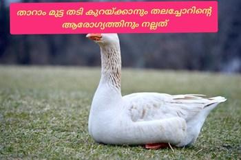 താറാവ് വളർത്തി വരുമാനം ഉണ്ടാക്കാം