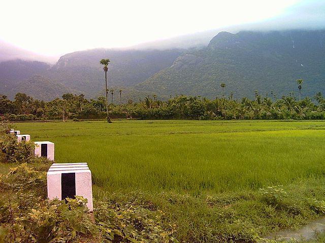 paddy fields in Nemmara