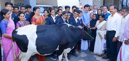 Donate a cow campaign