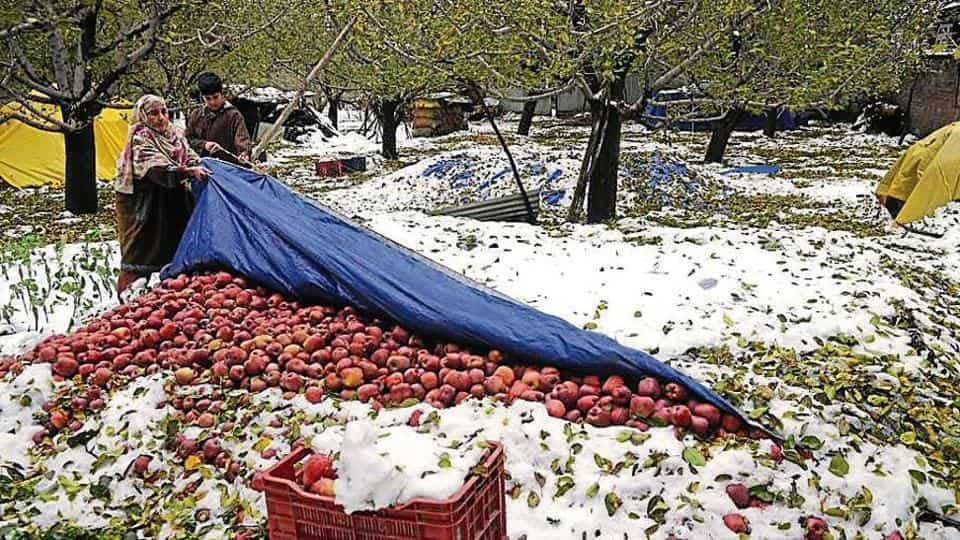 snow fall in Kashmir