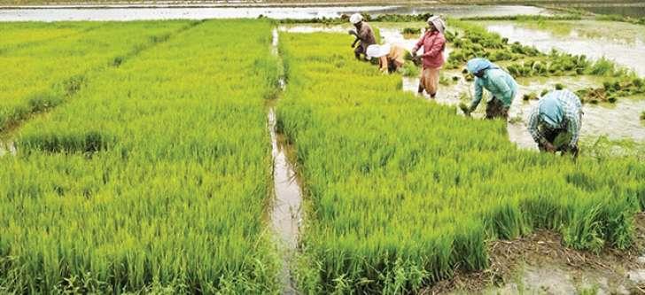 fertilizer scarcity