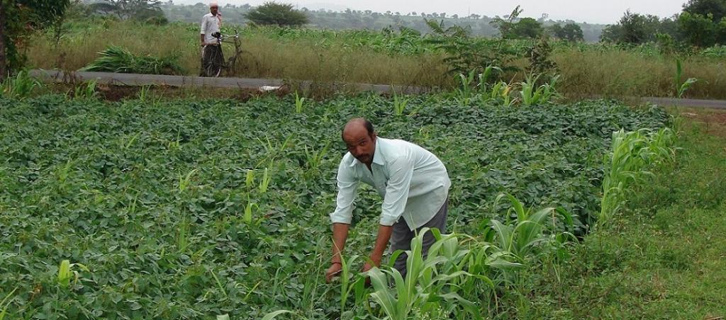 zero budget farming in Andhra