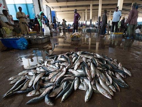 fish resource
