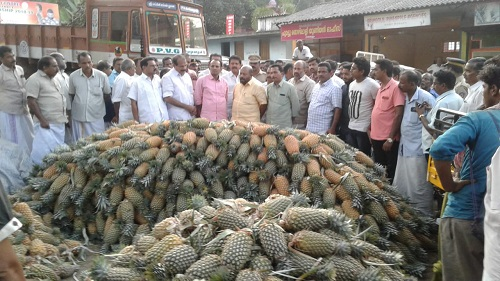 pineapple farmers
