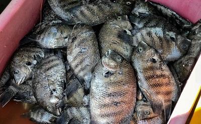 fish weight loss