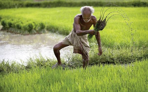 2000 per farmers