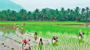 kerala agriculture sector