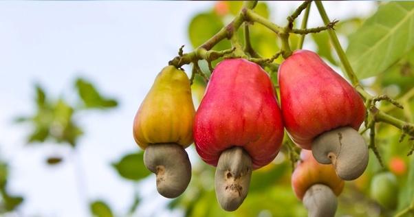 cashwefruit