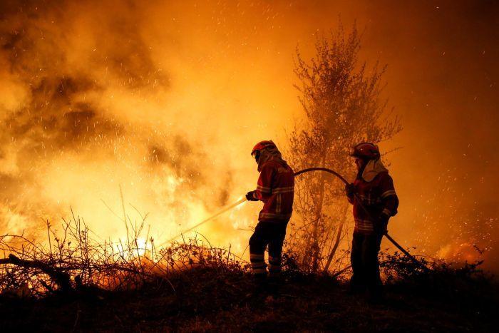kerala forest fire