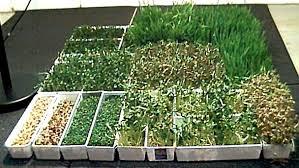 tray farming