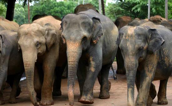 wild elephant park