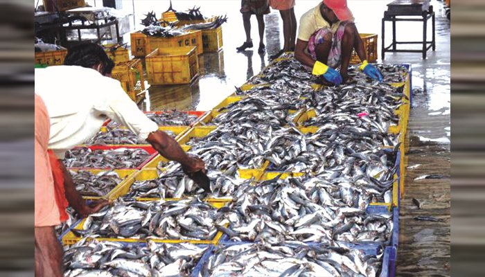 fish price