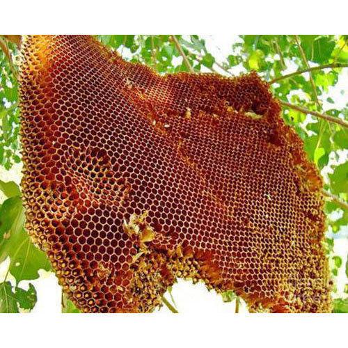 wild honey price increases