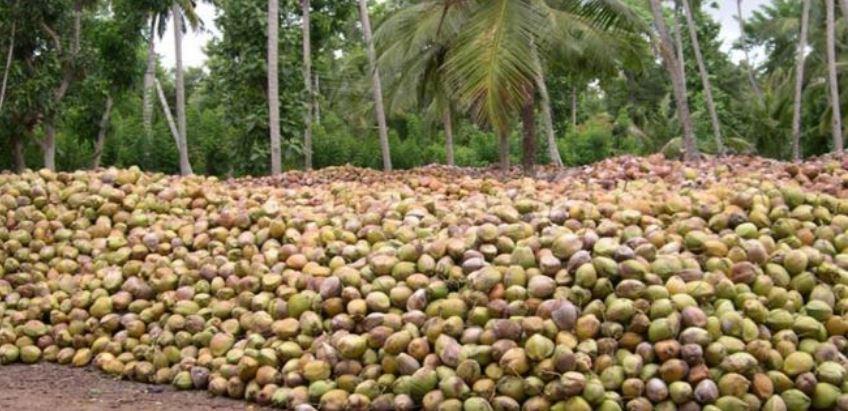 coconut from tamil nadu