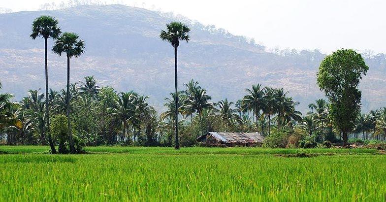 crop insurance day