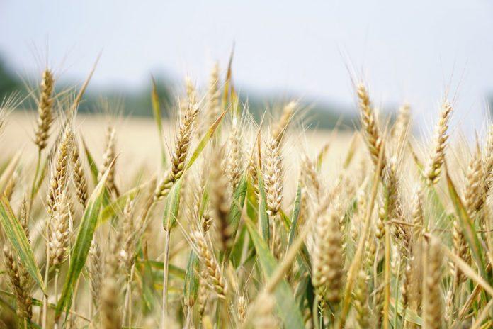 iffco reduces fertilizer price