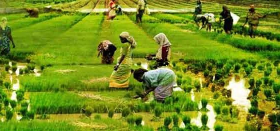 agriculture loan for farmers