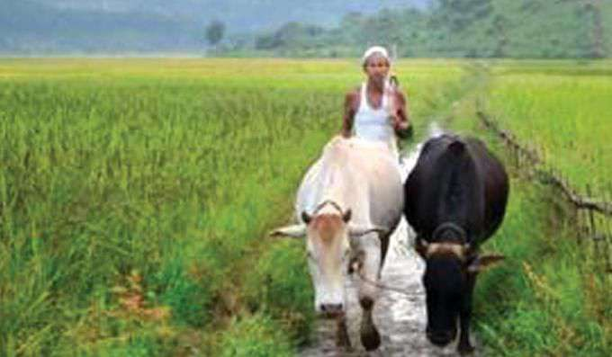 agriculture setor