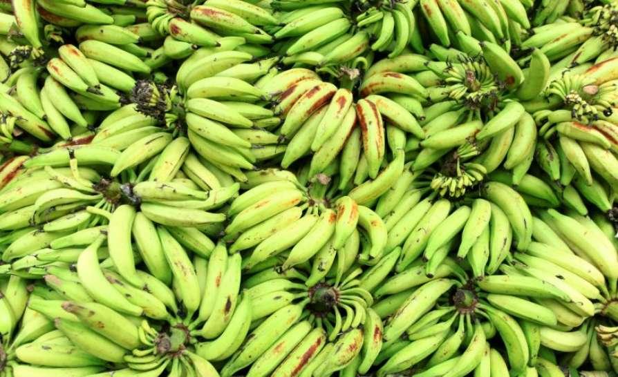 raw banana price