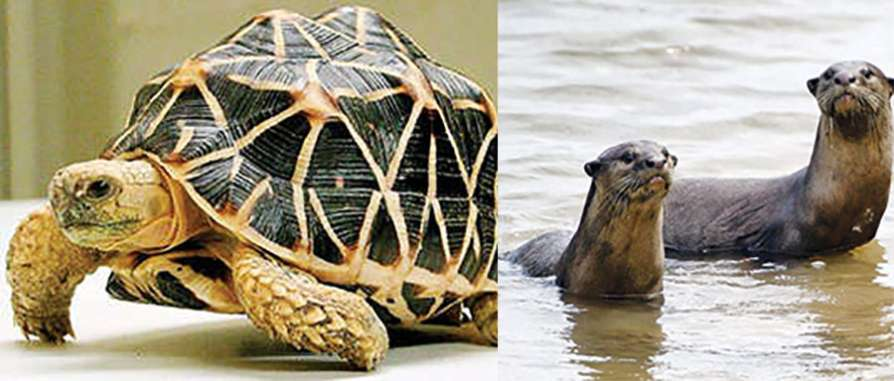 tortoise and otters