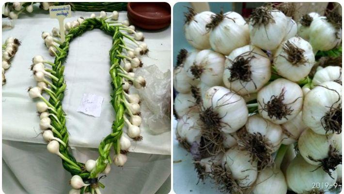 Garlic exhibition